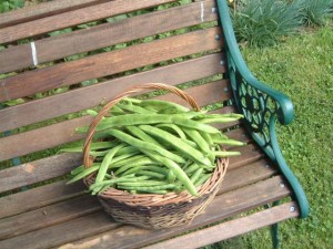 Picked_beans