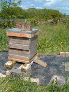 Empty bee hive ready for bees.